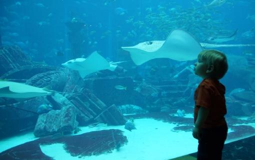 atlantis aquarium DSC06538